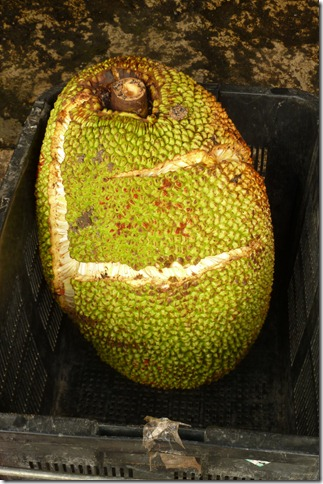 jakfruit1